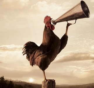 27. rooster-crowing-2