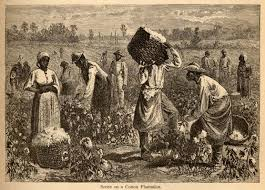 7.Slaves working cotton-1